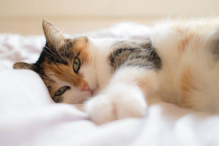 Luftbett Katze